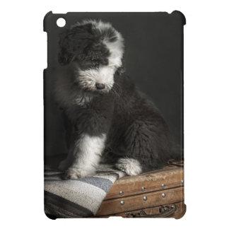 Bobtail puppy portrait in studio cover for the iPad mini