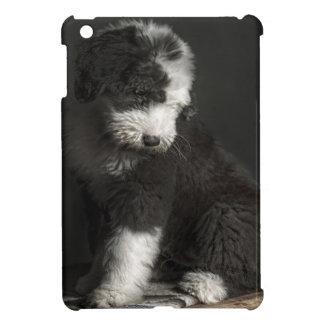 Bobtail puppy portrait in studio iPad mini cover