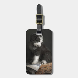 Bobtail puppy portrait in studio luggage tag