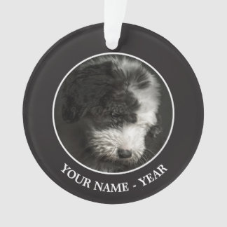 Bobtail puppy portrait in studio ornament
