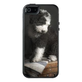Bobtail puppy portrait in studio OtterBox iPhone 5/5s/SE case