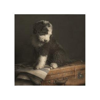Bobtail puppy portrait in studio wood wall art