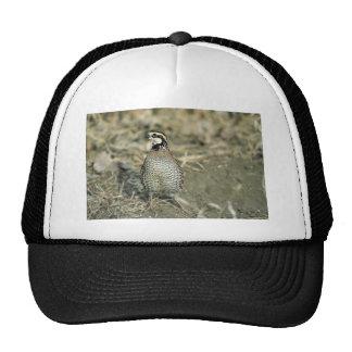 Bobwhite Quail Mesh Hat