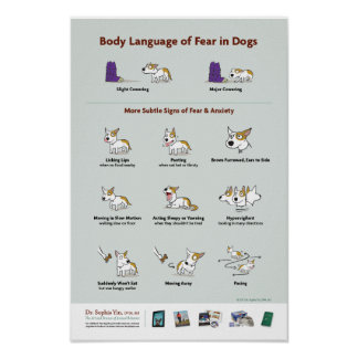 Body Language of Fear in Dogs Poster