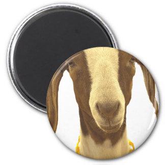 Boer Goat Magnet