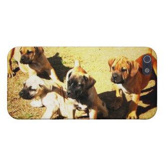 Boerboel iPhone Case iPhone 5 Case