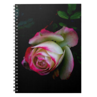 Bohemian Pink Rose Flower Nature Photo Notebook