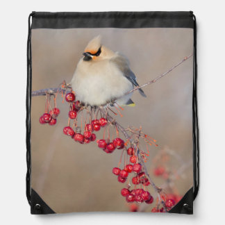 Bohemian waxwing in winter, Canada Drawstring Bag