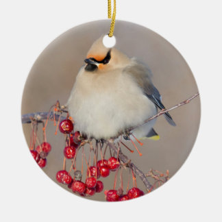 Bohemian waxwing in winter, Canada Round Ceramic Decoration