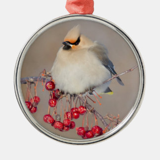 Bohemian waxwing in winter, Canada Silver-Colored Round Decoration