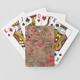 Bohemian Waxwings Feeding On Mountain Ash Playing Cards