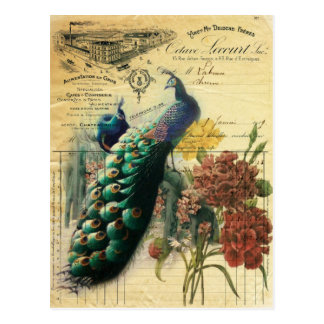 boho floral french country modern vintage peacock postcard