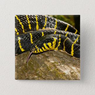 Boiga dendrophila or mangrove snake 15 cm square badge