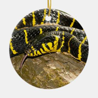 Boiga dendrophila or mangrove snake christmas ornament