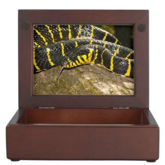 Boiga dendrophila or mangrove snake keepsake boxes