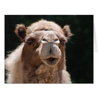 Bold Camel Big Greeting Card