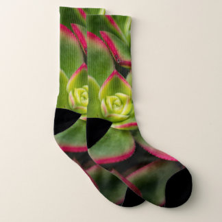 Bold Colorful Cactus Photo Socks
