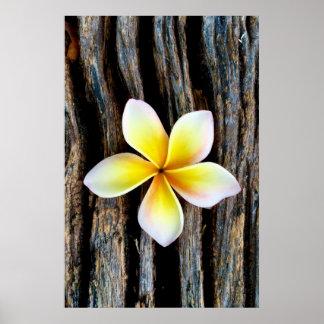 Bold Hawaiian Sunset Plumeria Poster