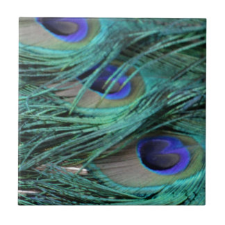 bold peafowl eyes tile