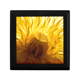 Bold yellow dandelion small square gift box