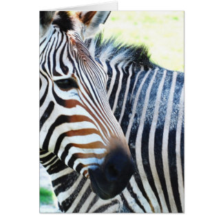 Bold Zebra Greeting Card