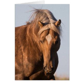 Bolder's Pride Wild Horse Greeting Card