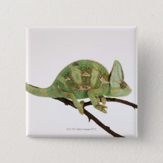 Boldly coloured chameleon with characteristic 2 15 cm square badge