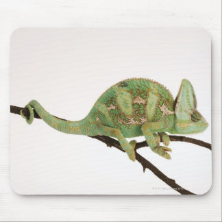Boldly coloured chameleon with characteristic 2 mouse mat