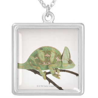Boldly coloured chameleon with characteristic 2 silver plated necklace