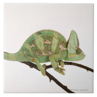 Boldly coloured chameleon with characteristic 2 tile