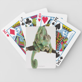 Boldly coloured chameleon with characteristic bicycle playing cards