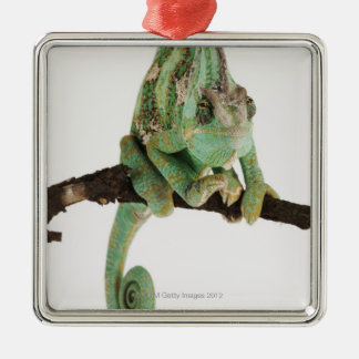Boldly coloured chameleon with characteristic christmas ornament