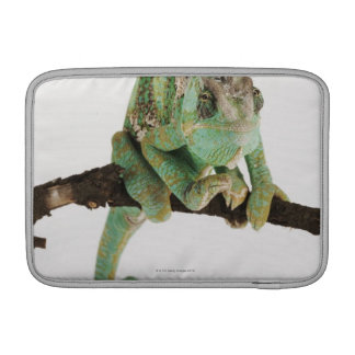 Boldly coloured chameleon with characteristic MacBook sleeve