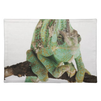 Boldly coloured chameleon with characteristic placemat
