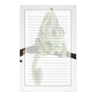 Boldly coloured chameleon with characteristic stationery
