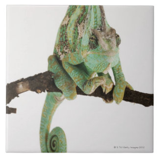 Boldly coloured chameleon with characteristic tile