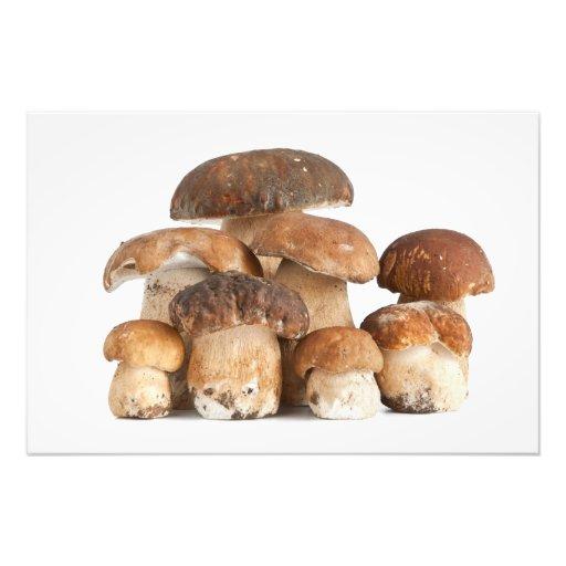 Boletus mushroom photograph