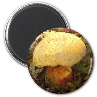 Boletus torosus Mushroom Magnet