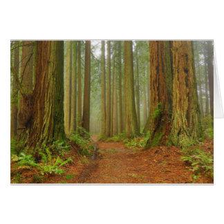 Bolinas Ridge Card