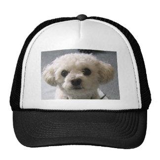 bolognese cap