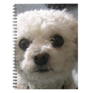 bolognese notebook