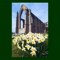 Bolton Abbey, Wharfedale, The Yorkshire Dales Art Photo