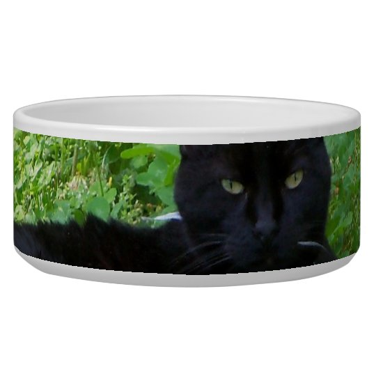 Bombay Cat Lying in Clover Food Bowl