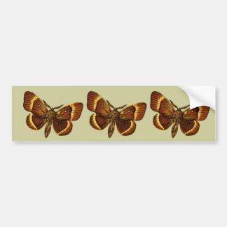 Bombyx quercus male bumper sticker