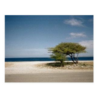 Bonaire tree postcard
