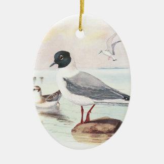 bonaparte s gull ornament