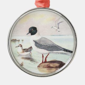 bonaparte s gull ornaments