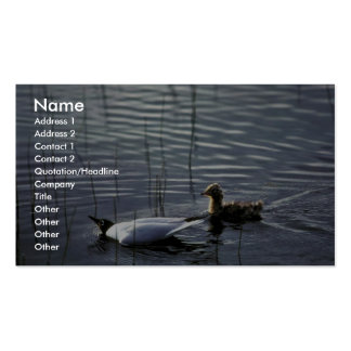 Bonaparte's Gull adult and chick Business Card