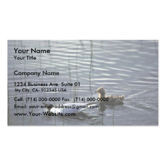 Bonaparte's Gull adult and chick Pack Of Standard Business Cards