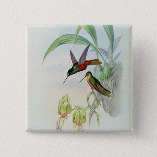 Bonaparte's Star Fronted Hummingbird (coloured lit 15 Cm Square Badge